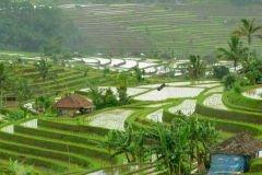 Bali_NY5