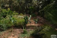 syorf-tur-v-marokko-v-avguste-2017-7