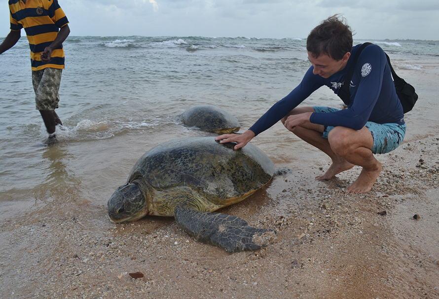 это гигантские черепахи на шри ланка фото него началась целая
