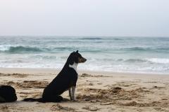 Этот пёс будет ждать нас после урока :)