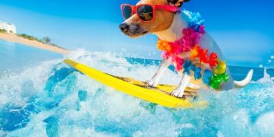 Сёрфинг на майские праздники 2019