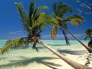 Сёрфинг в Доминикане (Пунта-Кана)